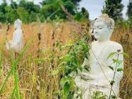 သဘာဝထိန်းသိမ်းရေး နယ်မြေများကို နိုင်ငံဧရိယာ၏ ၁၀% ဖြစ်လာစေရန် လုပ်ဆောင်